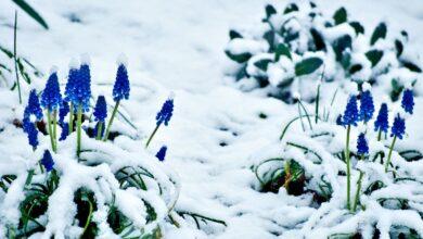 Liste des choses à faire en matière de jardinage pour février
