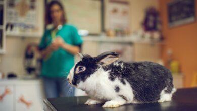 Maladies courantes Les lapins ont tendance à contracter