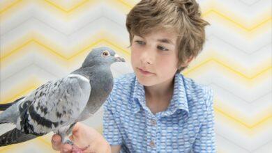 Maladies courantes des pigeons