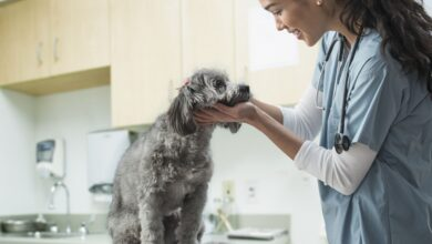 Mon chien a-t-il besoin d'une assurance pour animaux de compagnie ?