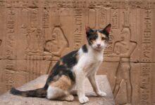 Noms de chats égyptiens