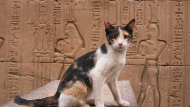 Photo de Noms de chats égyptiens
