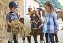 Nourrir les poneys : Alimentation et nutrition
