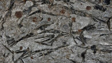 Pegmatite : Une roche ignée intrusive