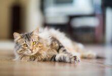 Pourquoi il ne faut pas déchiqueter un chat pour décourager les mauvais comportements
