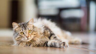 Photo de Pourquoi il ne faut pas faire ce geste pour décourager les mauvais comportements d'un chat