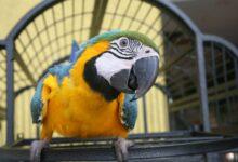 Pourquoi votre oiseau de compagnie crie-t-il ?