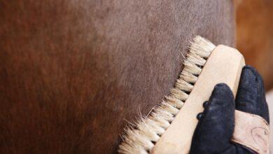 Produits et fournitures essentiels pour chaque propriétaire de cheval