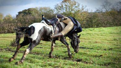 Que faire lorsque quelqu'un tombe d'un cheval