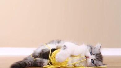 Photo de Que faire si votre chat a avalé une ficelle