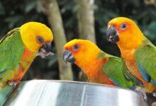 Quels sont les avantages pour mon oiseau domestique ?