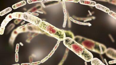 Qu'est-ce que l'anthrax ? Risque et prévention