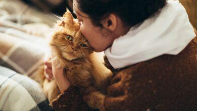Qu'est-ce qu'un animal de soutien émotionnel ?