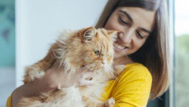 Qui a besoin de savoir sur l'adoption de votre chat ?