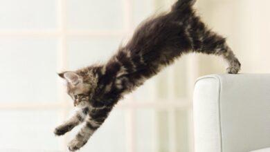 Photo de Raisons pour lesquelles les chats agissent comme des fous et comment y mettre fin