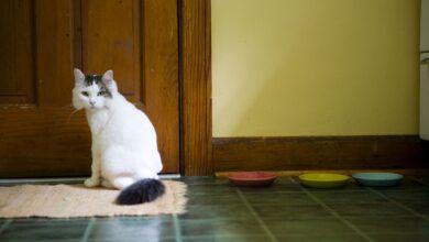 Photo de Raisons pour lesquelles les chats font caca sur les tapis et comment l'arrêter