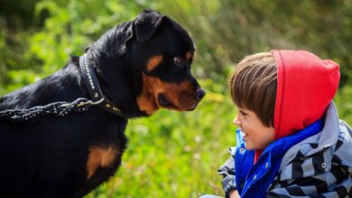 Raisons pour lesquelles les chiens mordent et comment les arrêter