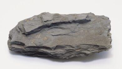 Shale Rock : Géologie, composition, utilisations