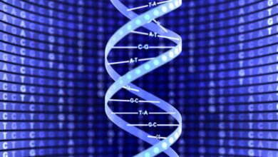 Structure à double hélice de l'ADN