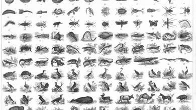 Système de classification linnéen (Noms scientifiques)