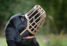 Tout ce que vous devez savoir sur les muselières de chiens