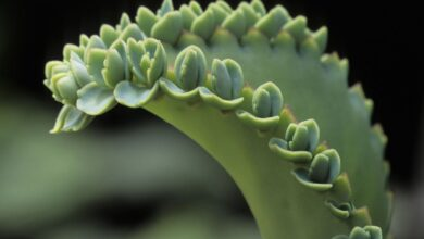 Types de propagation végétale