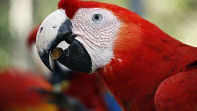 Photo de Un régime alimentaire composé uniquement de graines est préjudiciable à la santé de votre oiseau