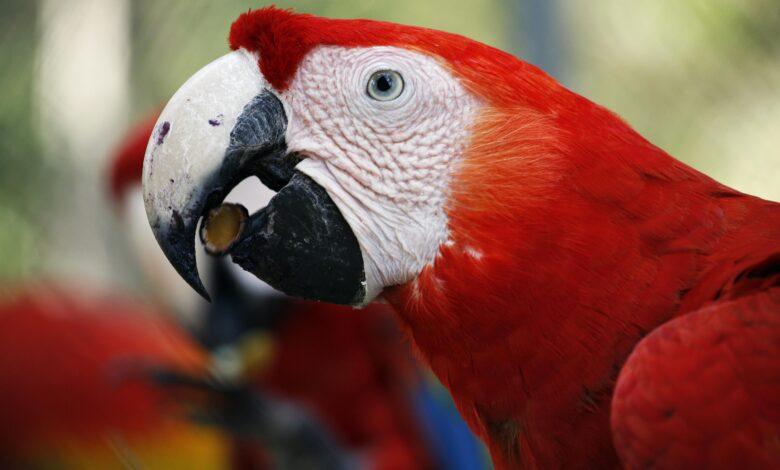 Un régime alimentaire composé uniquement de graines est préjudiciable à la santé de votre oiseau