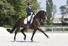 Une introduction au sport de l'équitation de dressage
