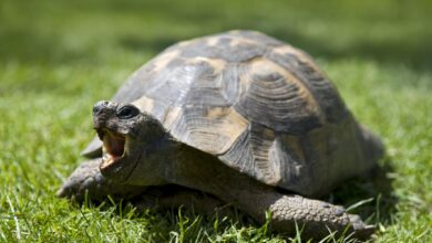 Une introduction aux tortues de compagnie