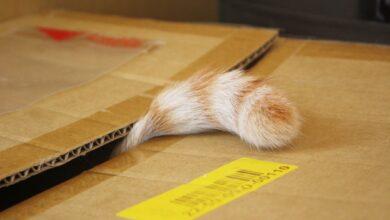 Voici comment fonctionne le chat de Schrodinger