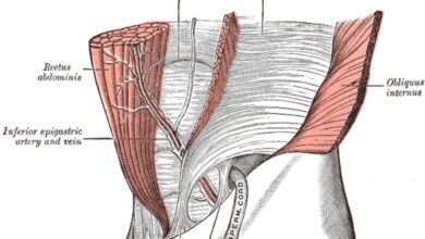 Votre force principale et le muscle transverse de l'abdomen