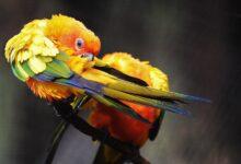 Votre oiseau est-il en train de perdre des plumes ?