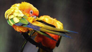 Photo de Votre oiseau est-il en train de perdre des plumes ?