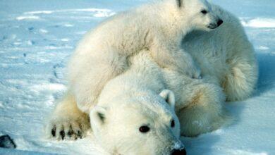 Photo de 10 Faits fascinants sur les animaux