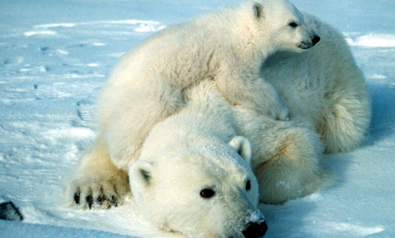 10 Faits fascinants sur les animaux