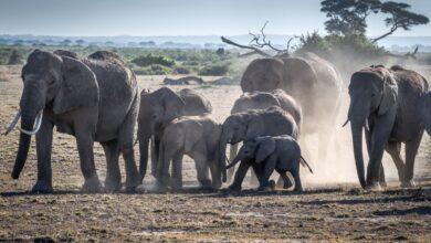 12 animaux ayant la plus longue période de gestation