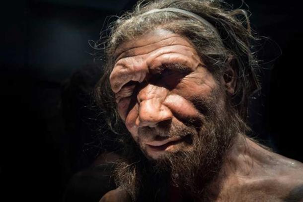 Homme de Néandertal au Musée d'Histoire Naturelle de Londres.