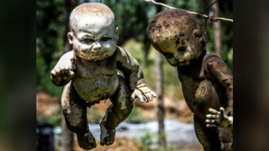 When collecting dolls for the Island of Dolls, Santana Barrera did not make any effort to clean them or to fix them up; once obtained he would hang them on the island's trees.