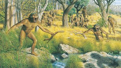Artists impression of a group of australopith