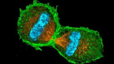Quiz sur la mitose et la division cellulaire