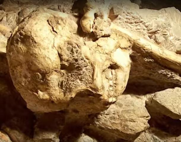 Crâne et os encastrés dans des brèches sur le site de découverte des grottes de Sterkfontein en Afrique du Sud.