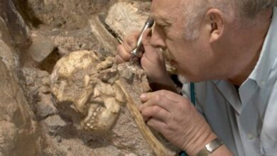Professor Ron Clarke busy excavating the Little Foot Skull from the Sterkfontein Caves.