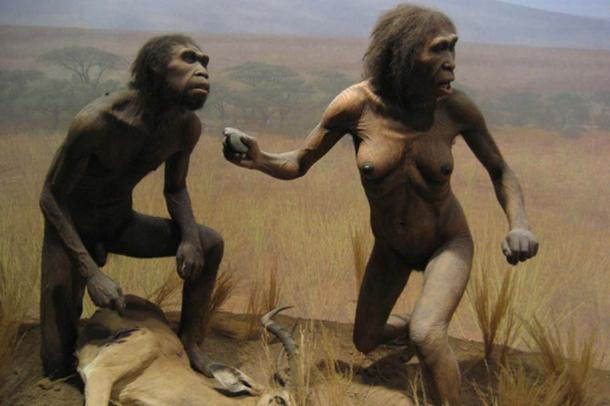NYC Spitzer Hall of Human Origins - Homo Ergaster, datant de 2 millions d'années.