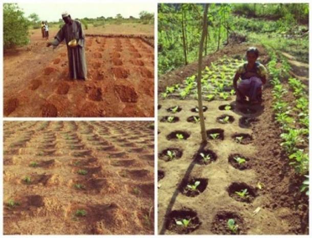Technique agricole zaïroise.