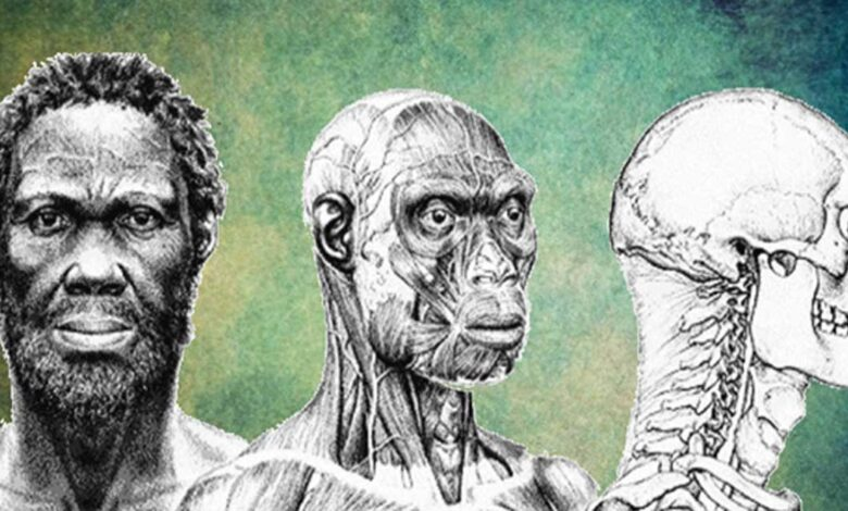Depiction of what the ancient 'Herto Man' may have looked like. His skull dates to 160,000 years ago.