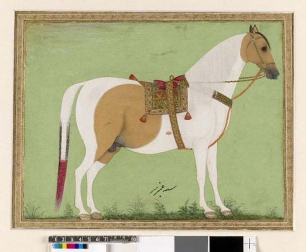 Peinture de style moghol représentant un cheval blanc avec une selle et une bride.