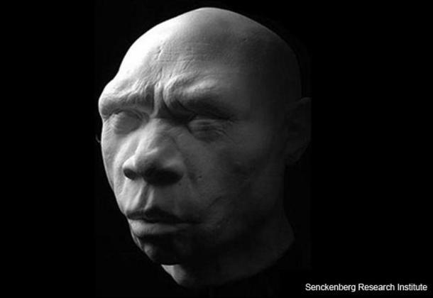 Homo heidelbergensis. Reconstitution de