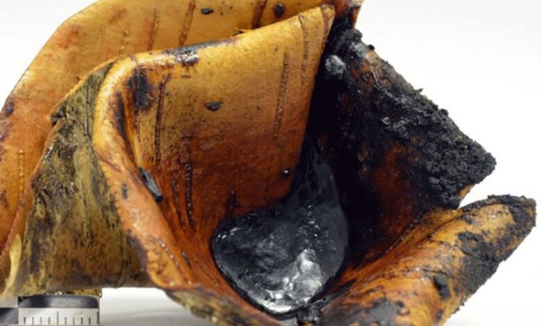 Tar collected in a birch bark container from the pit roll experiment, a technique which uses glowing embers placed over a roll of bark in a small pit.
