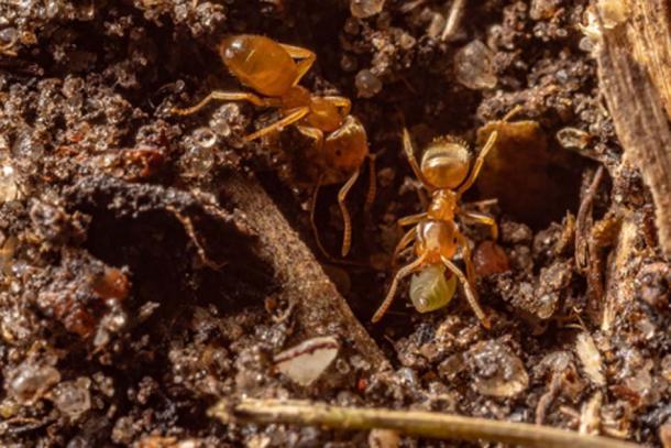 Les fourmis sont connues pour être très coopératives et pour créer des sociétés complexes capables de faire la guerre, de pratiquer l'agriculture et de construire d'immenses structures qui constituent leurs nids. (CC0)
